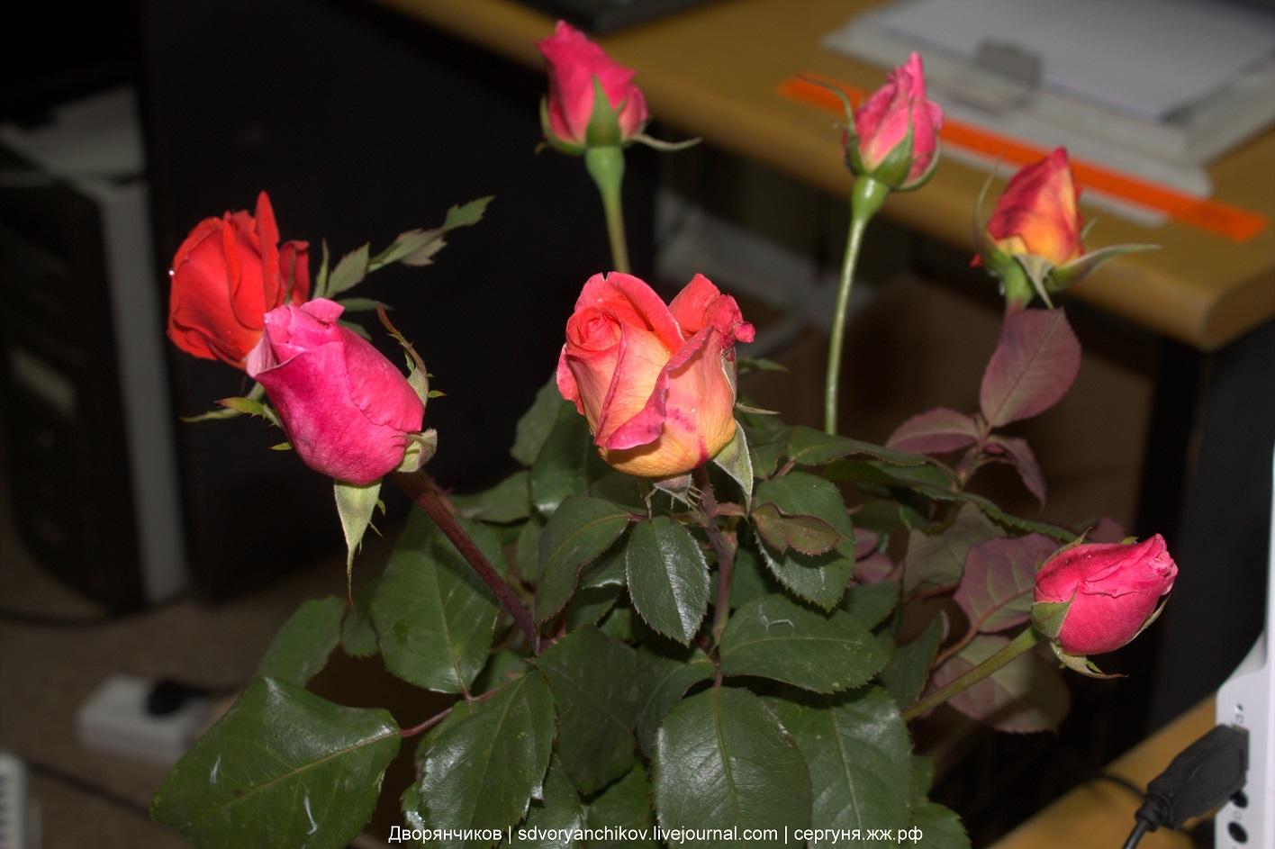 Розы - осенний букет