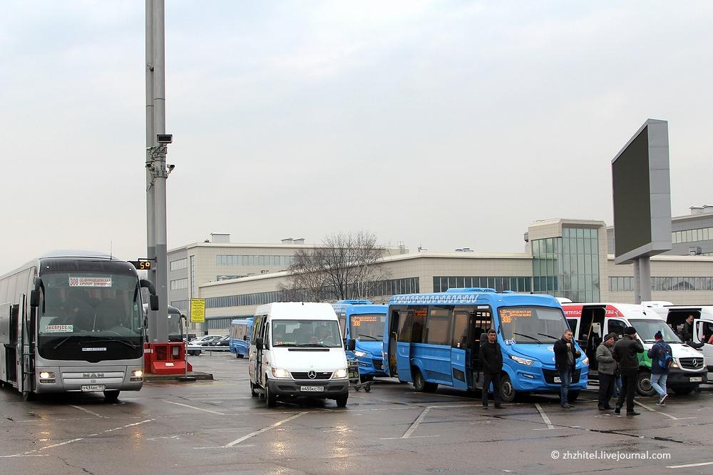 Автобусы в аэропорту Домодедово