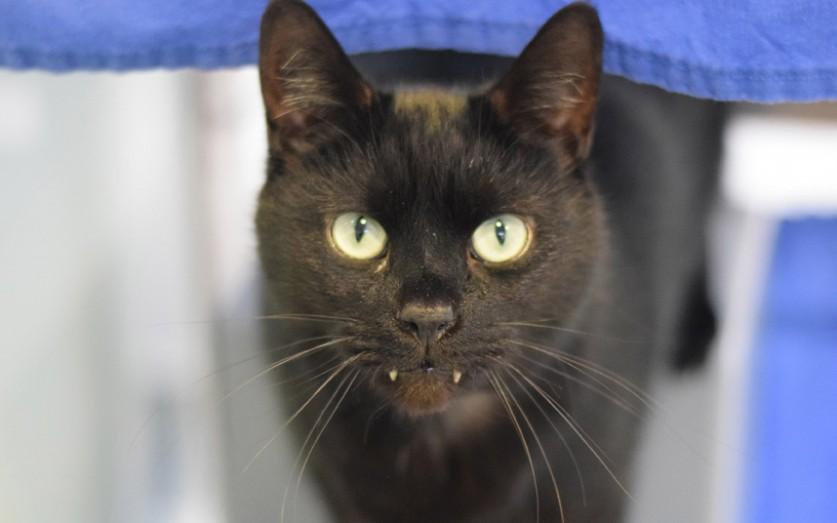 Кот по имени Рори с необычайно длинными клыками, что делает его похожим на Дракулу. В марте четырёхл