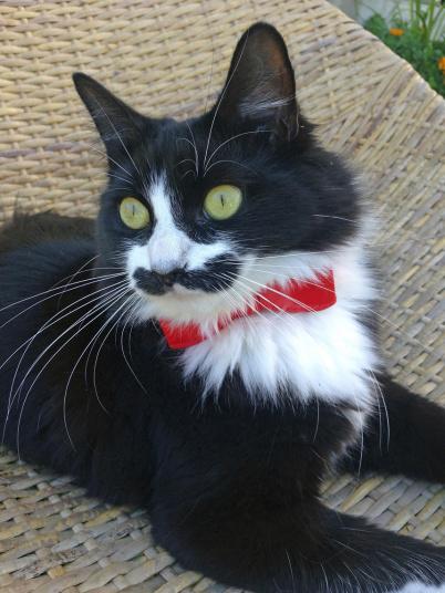 Звезда Инстаграма кошка по имени Маппет, которой в следующем месяце исполняется два года.
