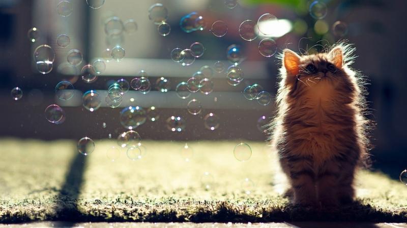 cat-soap-bubbles-1920x1080.jpg