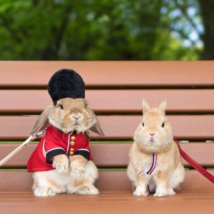 Токийские малыши-кролики