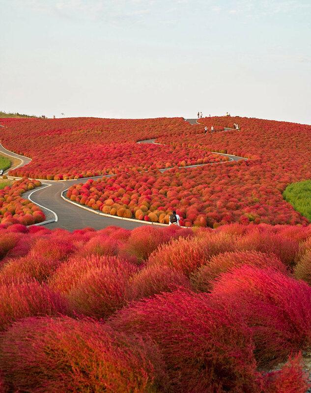 Осень в Национальном приморском парке Хитачи
