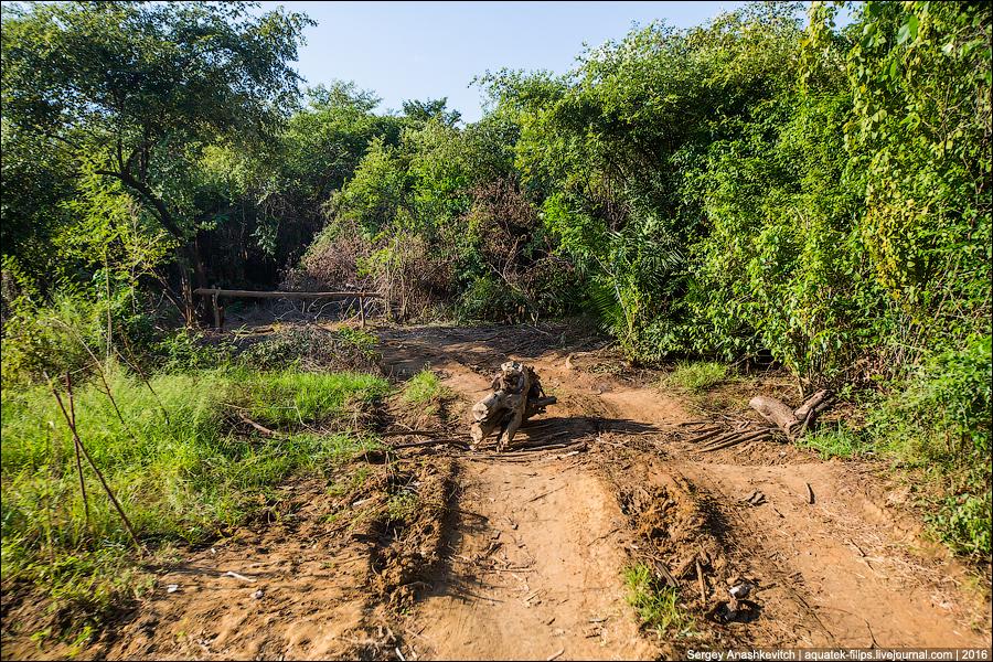 Платные дороги в джунглях Мадагаскара
