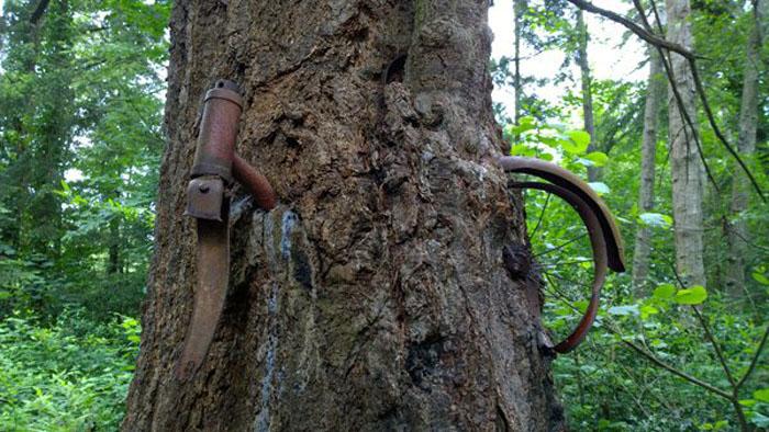 Чтобы выяснить историю дерева с велосипедом на острове Вашон (Vashon Island Bike Tree), не нужно воз