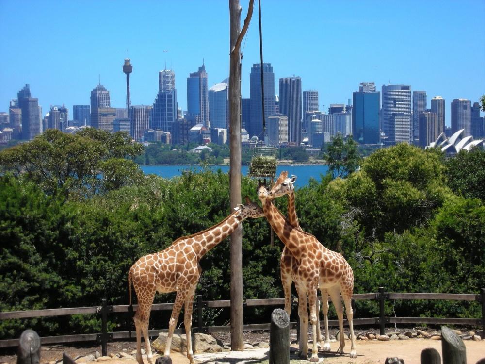 Взнаменитом старейшем зоопарке Таронга вСиднее (Taronga Zoo) живет около 340 видов животных. Добра