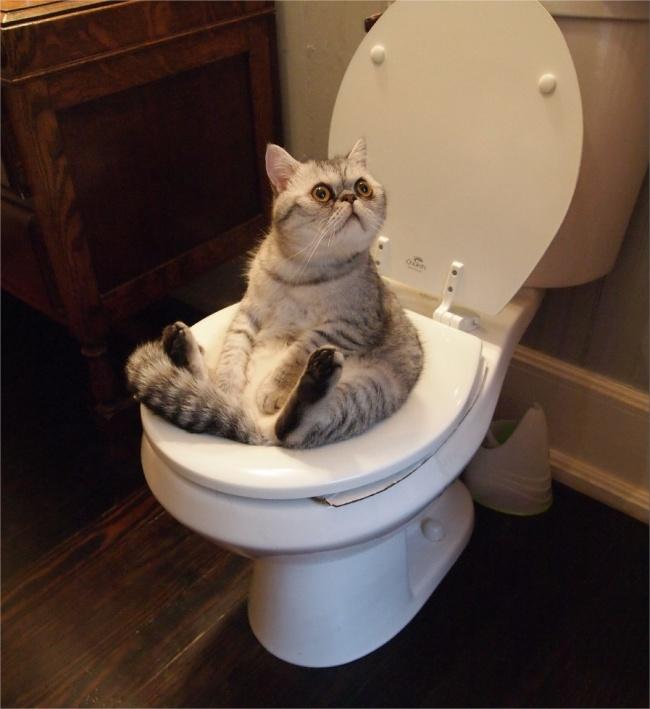 © reddit.com  Выже нехотите, чтобы котик обиделся иушел, правда?