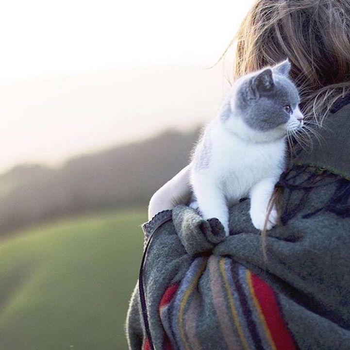 Кошки, которые любят путешествовать вместе со своими хозяевами