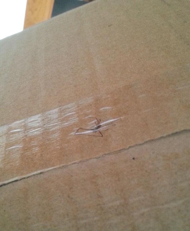 Они приклеили скотчем паука, чтобы клиенту было приятно.