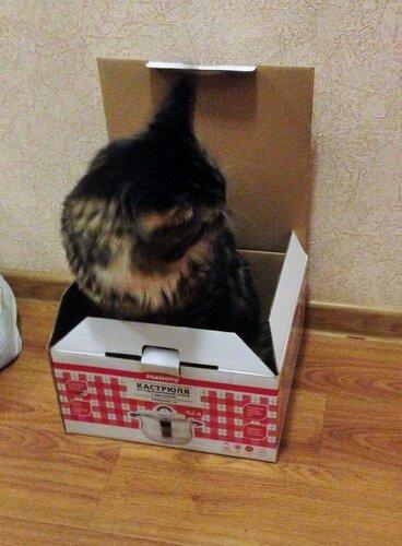 8_В коробке.JPG