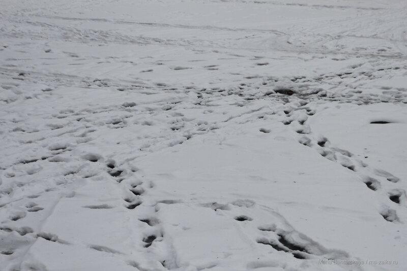 Новогодняя прогулка, Саратов, 02 января 2017 года