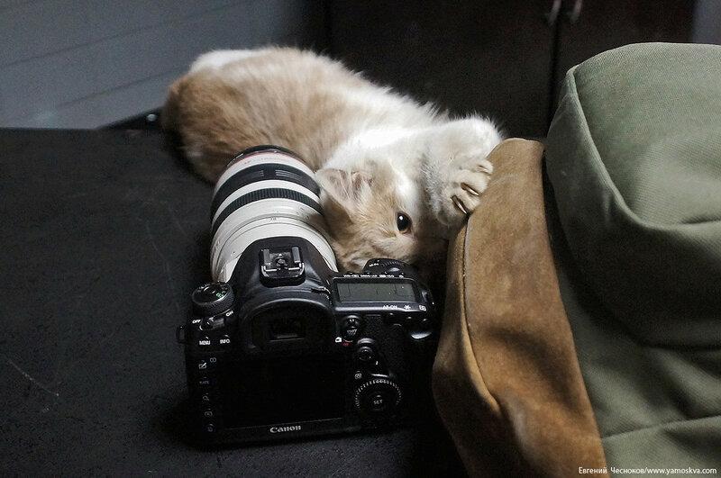 Олимпийский. котик. 23.02.17.02..jpg