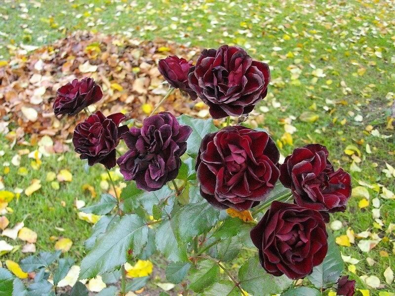 Осенние красавицы!