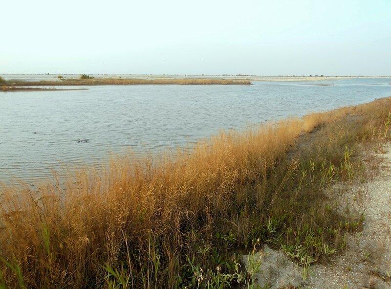 Залив, берега ... DSCN7401.JPG