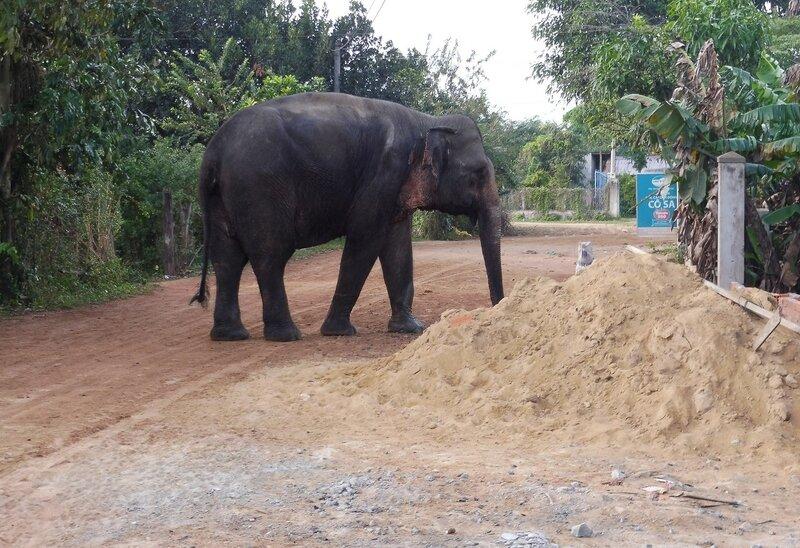 Домашний слон