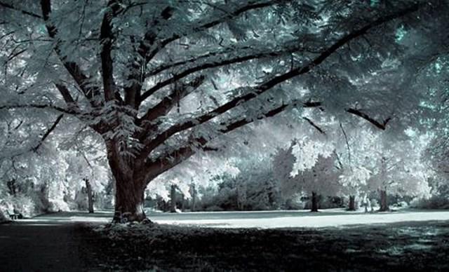 100 самых красивых зимних фотографии: пейзажи, звери и вообще 0 10f59d ede360c6 orig