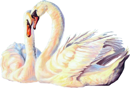 Birds54(swans)_dhedey.png