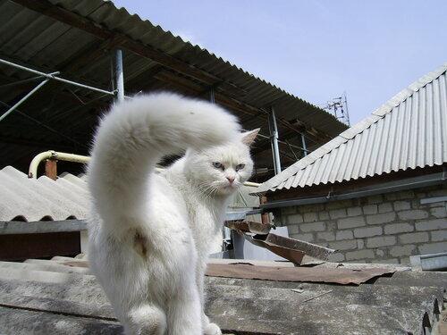 kon5535 — «Коты во всех их позах, мастях, разновидностях, эмоциях и занятиях. Просто коты. Или кошки.» на Яндекс.Фотках