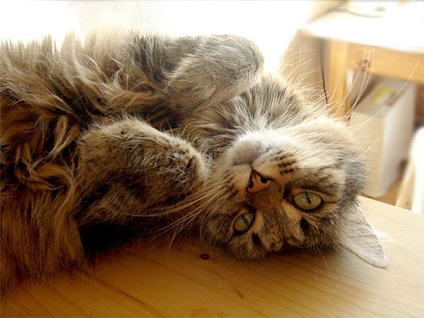 К вопросу о кошках
