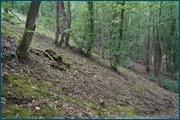 http://img-fotki.yandex.ru/get/4100/15842935.141/0_d0982_15234042_orig.jpg