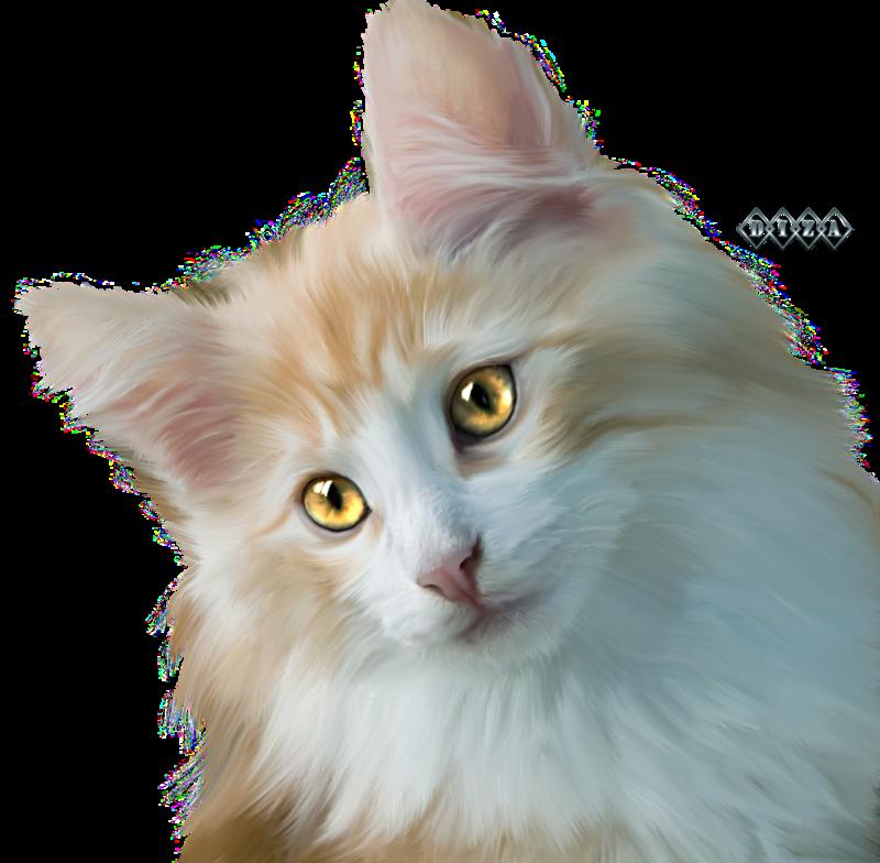 Котя.png