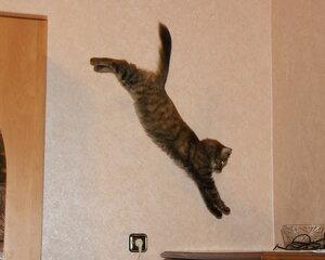 Муся летает