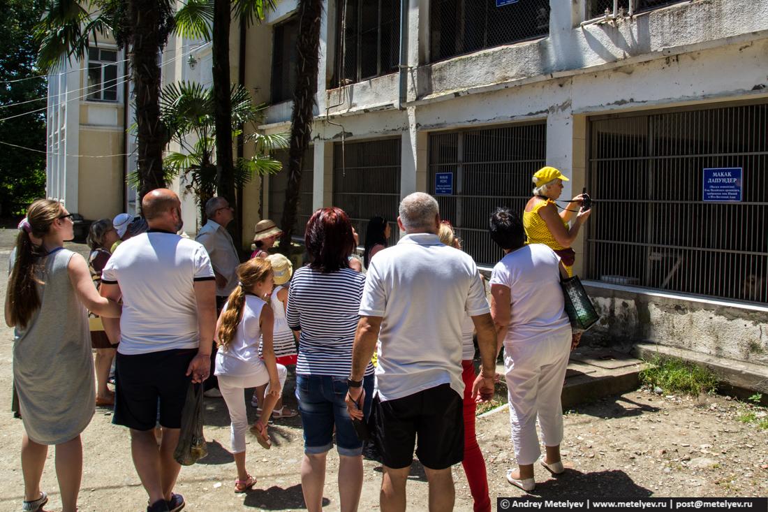 Туристы у клеток с обезьянами