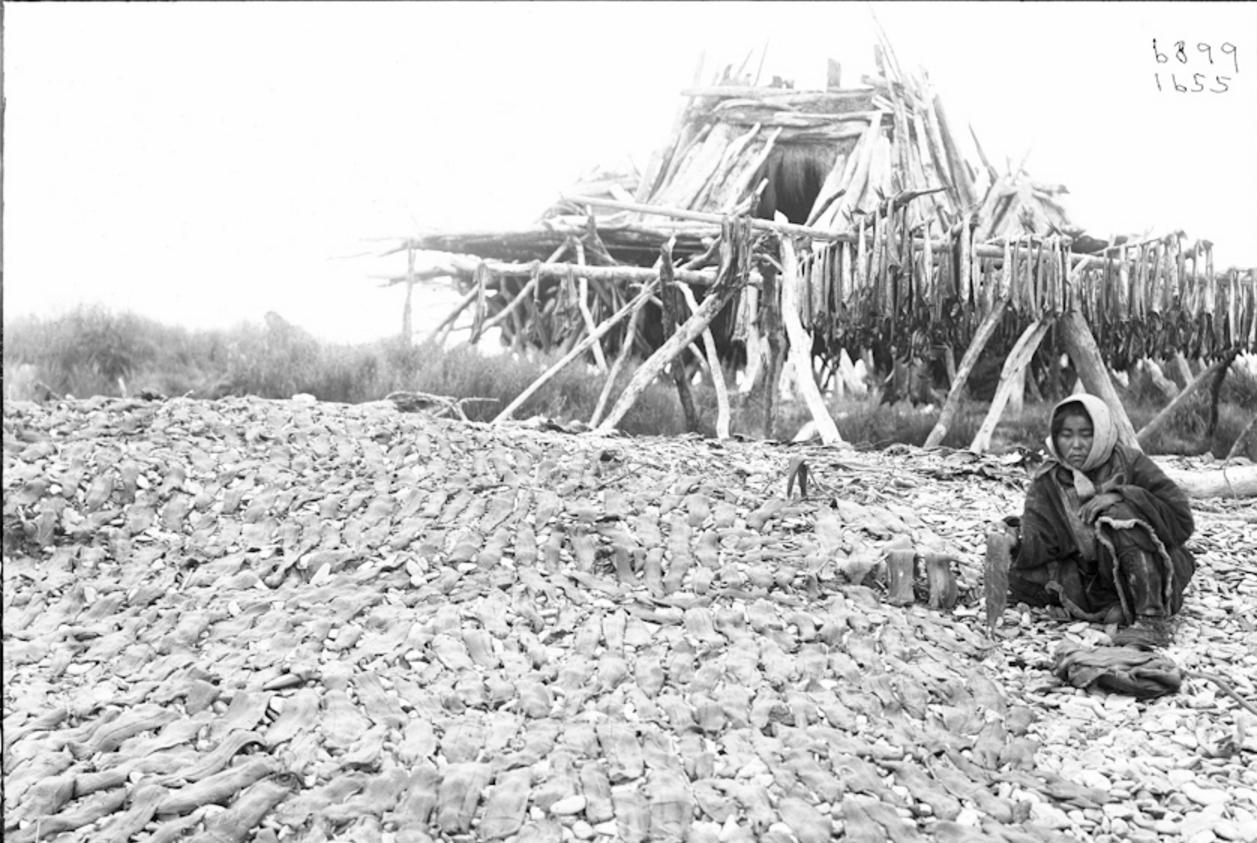 Корячка сушит рыбу, Сибирь, 1901