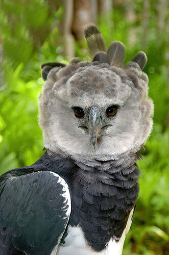 А вот еще птичка..... не совсем домашня, правда)))) 0_1ffa0_f8532555_L