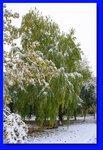 Ранний снег на Кубани