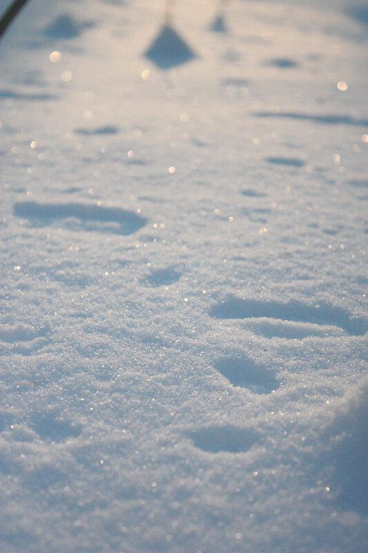 Блестящий снег