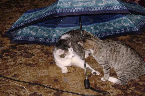 Ты почему тут разлегся? Это мой зонтик!