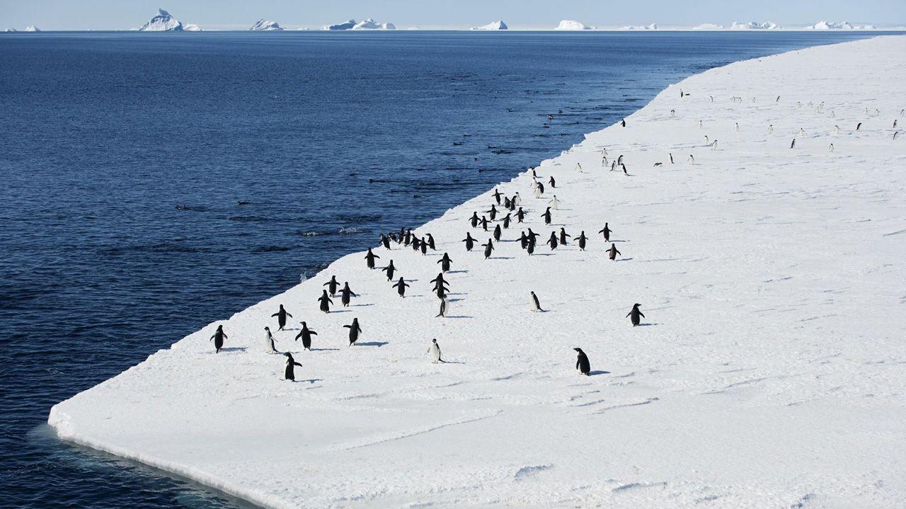 Человек ступил на берег Антарктиды (26 фото)