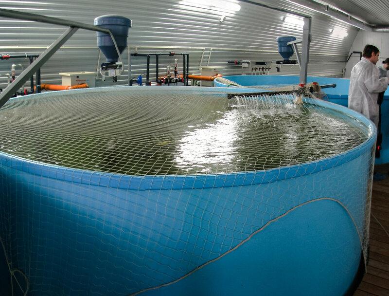 Бассейн для маточных рыб