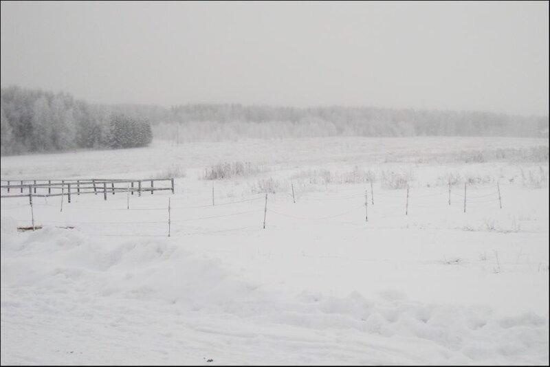 Зима на конюшне
