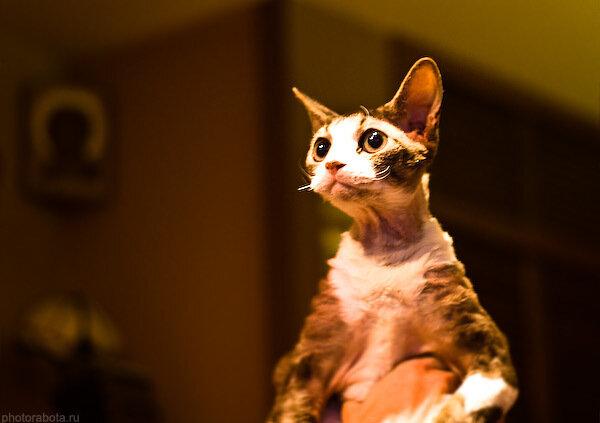 Фотография, Кошки