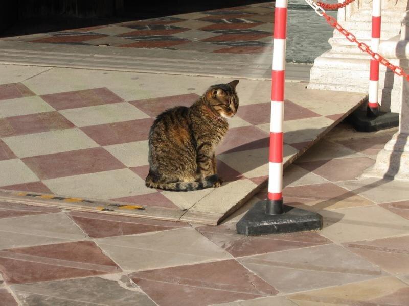 Кот у Скуолы Сан-Марко