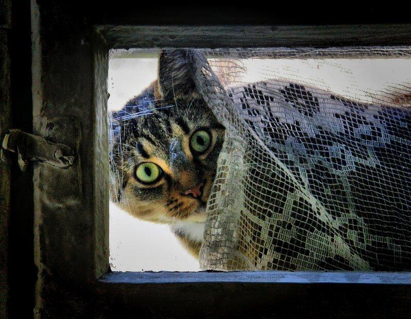 Смотрела кошка в чужое окошко.
