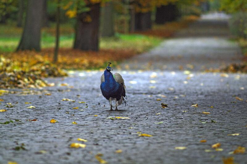 гуляет в парке(про качество я в курсе)