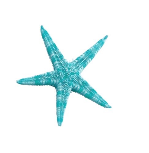 Ocean Treasures (67).png