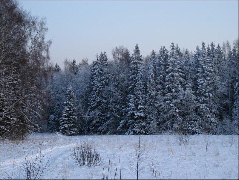 Вход в лес со стороны Закрытой поляны