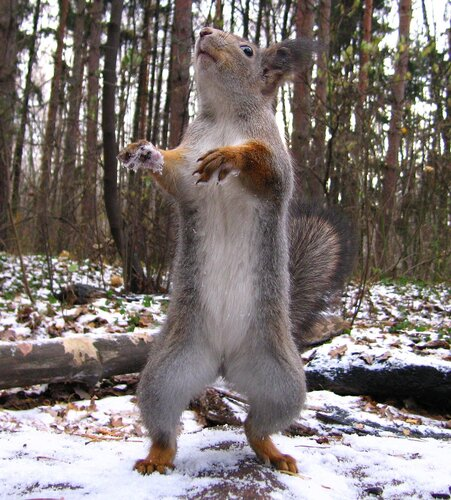 танцевать не буду,гони орешки