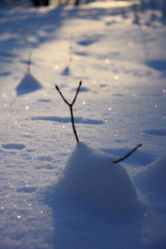Веточка в снегу