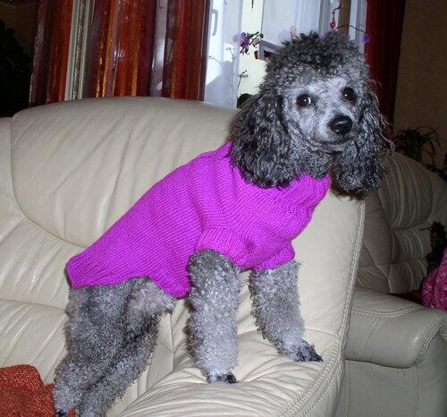 Связать свитер пуделю