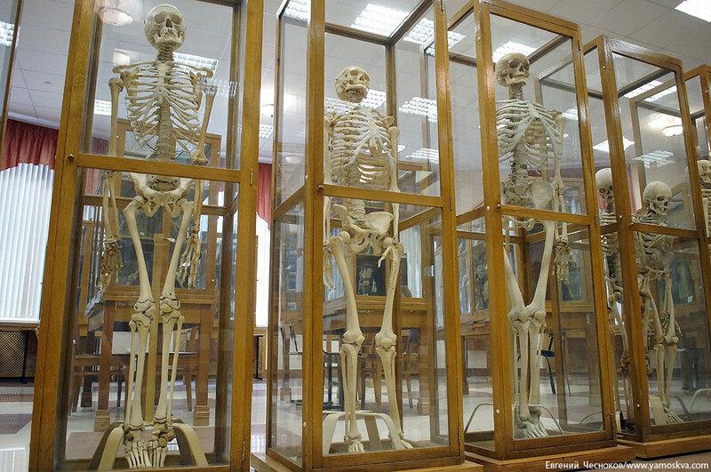 Лето. МГМУ. Музей анатомии. 27.08.15.16..jpg