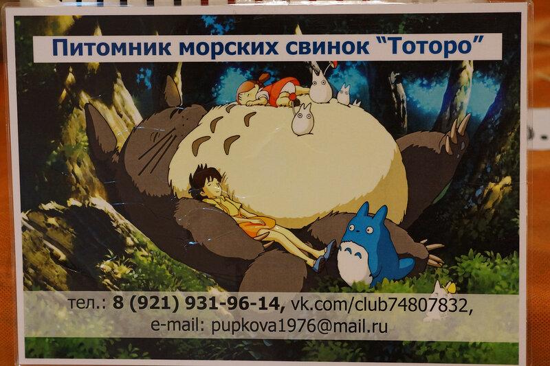 13 Морские свинки питомник.jpg