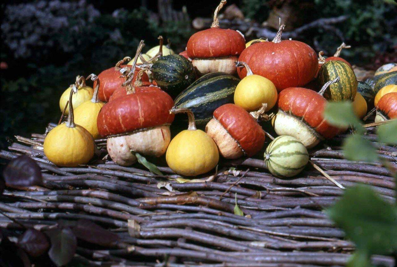 20. Разнообразные овощи
