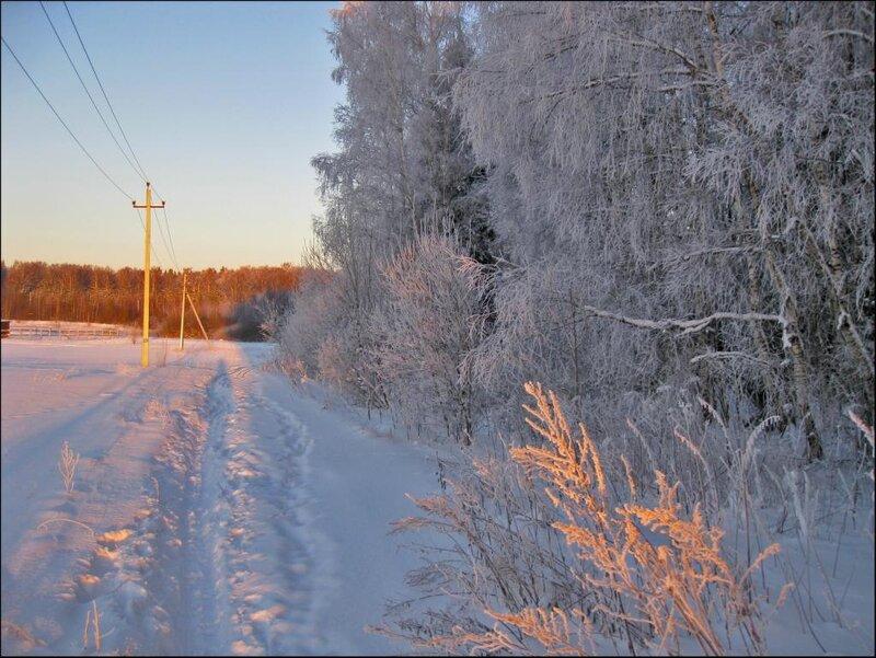 Дорога домой, вдоль опушки зимнего леса