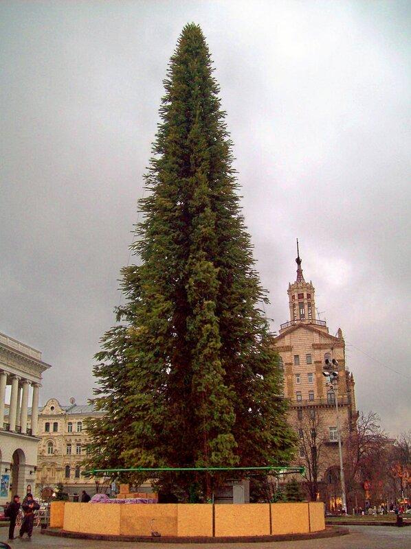 Прежняя конструкция главной елки Киева