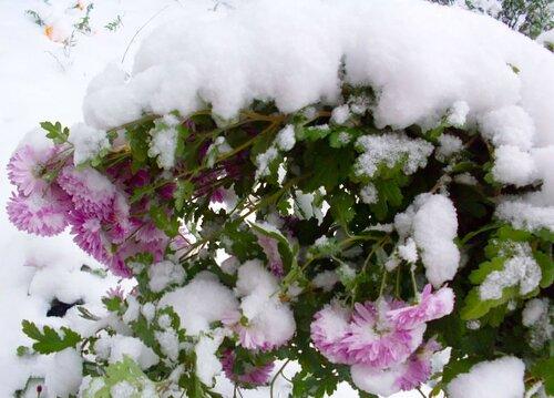 В Зимнем саду у Метелицы